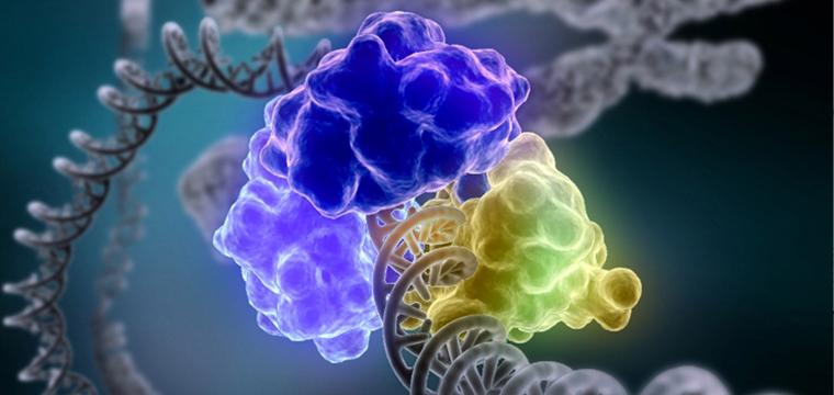 enzym-ligaza