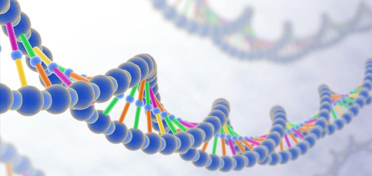 genotyp-fenotyp