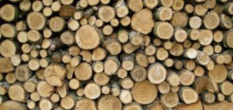 Różnice między drzewem a drewnem