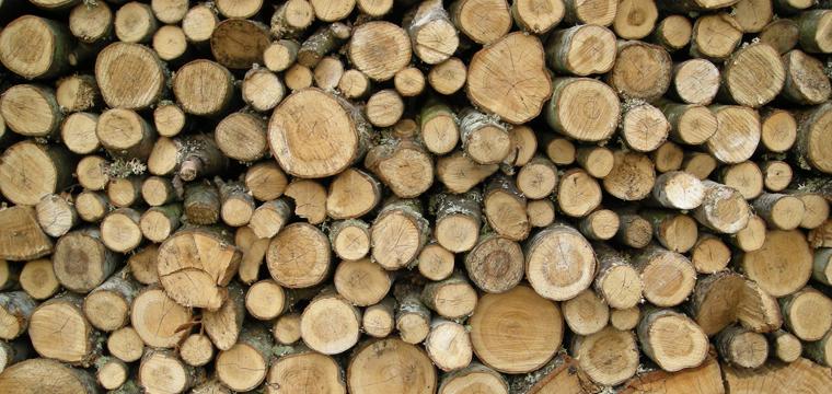 drewno-drzewo