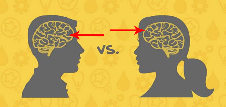mozg-kobiety-mezczyzny