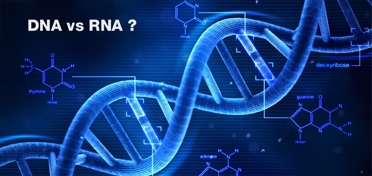 Różnice między DNA a RNA