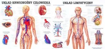 Rożnice między układem krwionośnym a limfatycznym